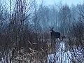 Встреча в лесу.jpg