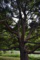 Выборг, парк Монрепо - panoramio (85).jpg