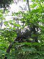 Дендрологічний парк 125.jpg