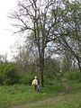Дендрологічний парк 228.jpg