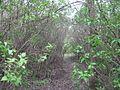 Дендрологічний парк 240.jpg