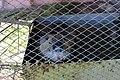 Кам'янець-Подільський зоопарк IMG 8816 12.jpg