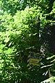 Каштани Гришка DSC 0335.jpg