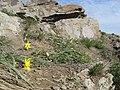 Королівські скелі Тюльпан бузький.jpg