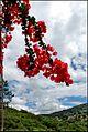 Корфу, Палеокастрица - panoramio (14).jpg