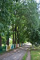 Липові алеї в м.Летичів.jpg