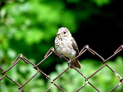 Молода пташка покинула свою домівку.JPG
