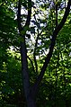 Парк Аскольдова могила у Києві. Фото 8.jpg