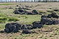 Половецький степ, каміння.jpg