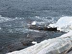 Прибой - Surf - panoramio.jpg