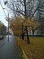 Сельскохозяйственная улица - panoramio (1).jpg