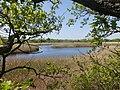 Солоноозерна ділянка. Озеро Власиха.jpg