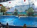 Сочинский дельфинарий парка «Ривьера». 20.jpg