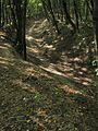 Тропинка в овраге - Path in a gully - panoramio.jpg