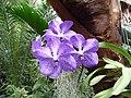 Тропическая орхидея.jpg