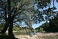 У лесного озера - panoramio.jpg