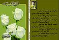 الوردة السادسة.jpg