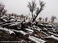 برف روی تنه های درخت بریده شده - panoramio.jpg