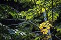 گیاهان در پاییز - باغ بوتانیکال تفلیس 04.jpg