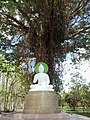 วัดปากอ่าง - พระพุทธรูปใต้ต้นไทร - panoramio.jpg