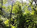 乐业穿洞天坑20141003 - panoramio (63).jpg