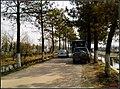 合肥大圩 - panoramio.jpg