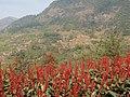御温泉酒店旁边的山 - panoramio.jpg