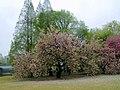 新宿御苑 - panoramio.jpg