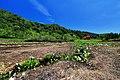 栂池自然園 - panoramio (5).jpg