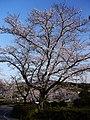 水源公園 - panoramio - gundam2345 (6).jpg