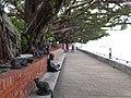 淡水榕堤 Tamsui Banyan Bank - panoramio.jpg