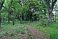 矢川緑地 - panoramio (49).jpg