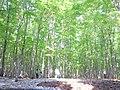 美人林の春 - panoramio.jpg
