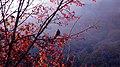 鸟和树-黄柏塬乡核桃坪村 - panoramio.jpg