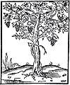 02 Rumpotin, Alciat, Emblematum Libellus, 1542.jpg