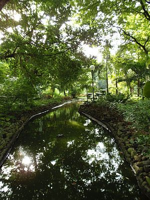 Washington SyCip Park - Image: 03 koi pond