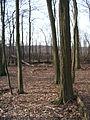 05-04-03-plagefenn-by-RalfR-46.jpg