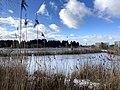 1039.DeHeld.Vinkhuizen.Westpark.Rietvelden.Waterskivijver.Natuur.Watervogels.Eenden.jpg