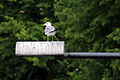 11-07-29-helsinki-by-RalfR-233.jpg