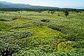 140829 At Shiretoko Goko Lakes Hokkaido Japan10bs5.jpg