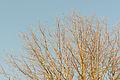16-01-18-Joachimsthal-RalfR-N3S 3682.jpg