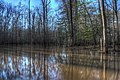 16-06-058, bond swamp - panoramio.jpg