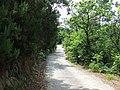 17012 Albissola Marina, Province of Savona, Italy - panoramio (4).jpg
