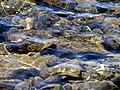 17 Isla Taquile Peru 3160 (14955055598).jpg