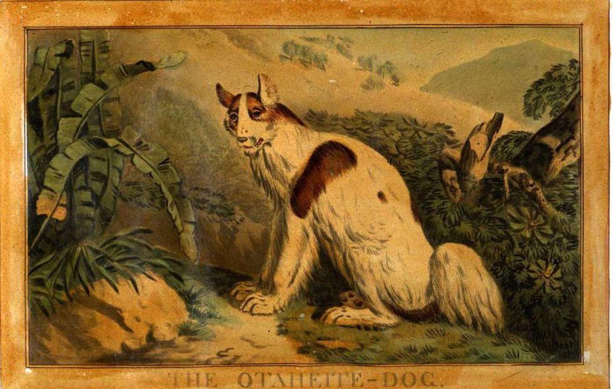 Polynesian Dog Wikipedia