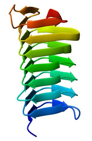 Beta helix - Monomeric, left-handed β-helix antifreeze protein from the spruce budworm Choristoneura fumiferana (PDB accession code 1M8N).