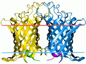 Outer membrane phospholipase A1