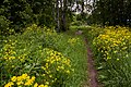 20120612 Остров Юршинский. Заброшенный парк усадьбы.jpg