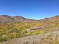 2014-10-04 13 45 57 View of Aspens during autumn leaf coloration from Charleston-Jarbidge Road (Elko County Route 748) in Copper Basin about 9.9 miles north of Charleston, Nevada.jpg