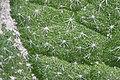 2015.04.30 16.39.36 IMG 1705 - Flickr - andrey zharkikh.jpg